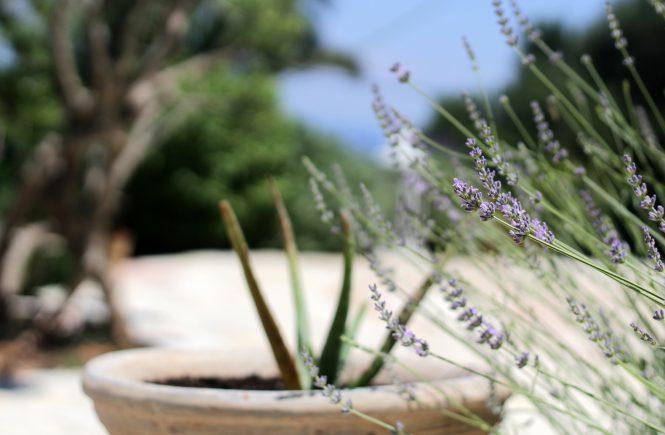 xigia area- holidays in zakynthos